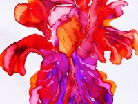 iris-orange-purple-wc-small